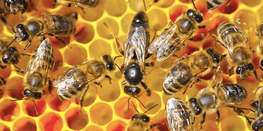 Biene på Vestby Storsenter